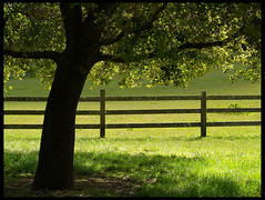 Point Reyes Oak Tree (MistyDays / CB) Tags: california tree grass fence spring oak bravo scout explore nationalparks westcoast oaktree earthday pointreyesnationalseashore interestingness2 gadling happyearthday charleneburge specland stormygirl 123f50 anawesomeshot earthshots colorphotoaward superaplus aplusphoto top20green pointreyesns highestposition2onwednesdaydecember192007