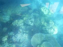 terumbu karang di pantai rubiah