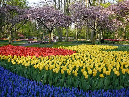 Keukenhof flower park #10