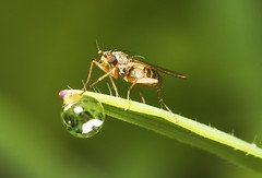 """Fly with Droplet • <a style=""""font-size:0.8em;"""" href=""""http://www.flickr.com/photos/57024565@N00/474407943/"""" target=""""_blank"""">View on Flickr</a>"""