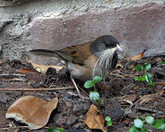 nest-maker