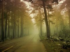 Fog (Inmacor) Tags: road tree fog spring spain topf50 naturesfinest beautifulearth impressedbeauty ltytr2 ltytr1 ltytr3 ltytr4 ltytr5 superbmasterpiece unanimidad