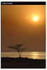 Loneliness- Show me the meaning of being lonely (Hussain Shah.) Tags: sunset tree abandoned d50 nikon silhouettes kuwait 1855mm nikkor sulaibikhat الكويت aplusphoto kuwaitimuwali محميةخليجالصليبيخات كويتيموالي