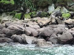 IMG_0184 (Maggie Paige) Tags: newzealand southisland abeltasmannationalpark coastaltrack