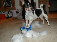 santa dog puppy toy rat terrier greeblie