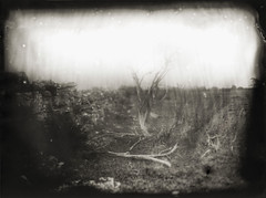 Alvar (BosseB) Tags: print cocktail largeformat se1 glassplate land dryplate halation fkd 18x24cm fomabrom