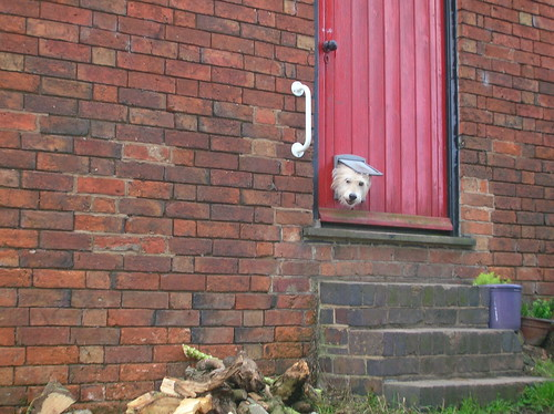 Naughty doggie barking at us through the letter box