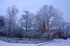 Snow #10