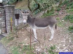 esel (nobochamp) Tags: donkey burro esel