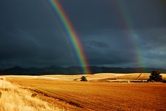 field of gold @ the end of the rainbow (HyeStyleShots thank you to a very generous friend ) Tags: california road blue light red two sky sun storm mountains tree green nature colors beauty field weather yellow clouds fence dark landscape gold rainbow view cloudy afterthestorm earth weekend scenic roadtrip double rows land twice roadside kpa promise renew wayhome 166 aclass abigfave colorphotoaward hyeclass blesssed diamondclassphotographer kerncountyphotographers