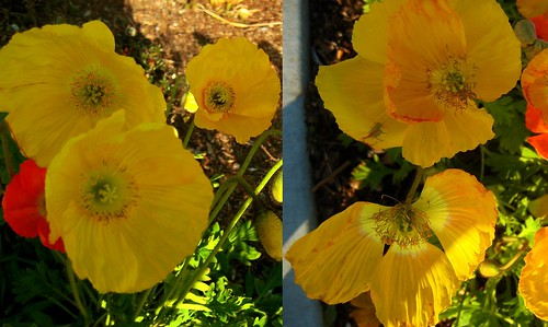 yellowsunshine diptych