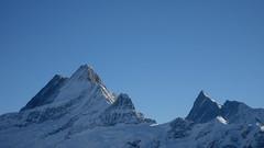 Berg / Mountain : Lauteraarhorn - Schreckhorn und Finste