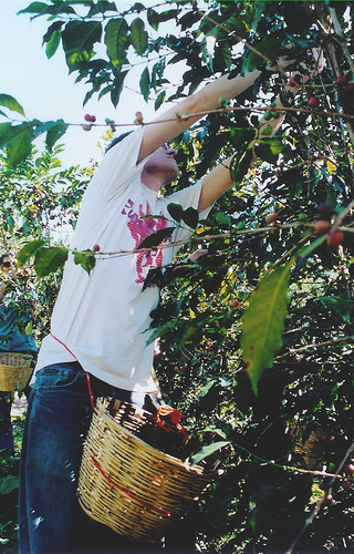Picking coffee takes more skill than you think