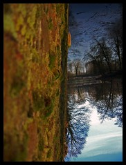 where is my mind? (BkTs) Tags: wood trees cold reflection tree water wall leaf kodak inversion lille 180 dx7590 envers citadelle reflectionof