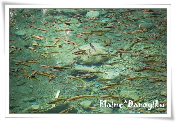 第一賞魚區的魚最多