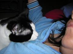 cats behavior
