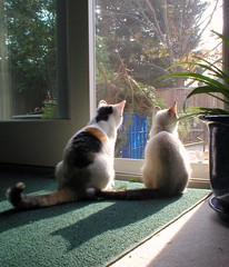 ALVIN & MOLLY-GIRL CHECKING OUT THE YARD! (stefshep7) Tags: friends cats pets cute cat adorable pals molly alvin outstandingshots cc100 kissablekats bestofcats ultimateshot kittyschoice goldenphotographer picturefantastic camfjan08 5mikemay
