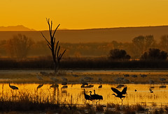 Measuring Moments at the Magic Hour (Fort Photo) Tags: morning sky sun newmexico color bird nature birds animal clouds sunrise landscape gold dawn wings bravo searchthebest crane quality wildlife birding cranes bosque ave nm ornithology bosquedelapache avian sunup daybreak 2007 sandhillcrane morn firstlight nwr naturesfinest blueribbonwinner vibrancy supershot 50faves featheryfriday birdphoto outstandingshots specnature abigfave flickrgold anawesomeshot colorphotoaward flickrplatinum goldenphotographer wowiekazowie flickrdiamond 50f123