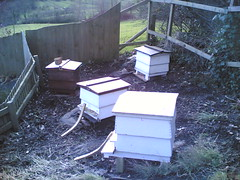 beehives4