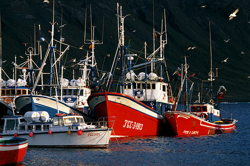 2524-150411 - Fishing vessels - Copyright by Martin Liebermann