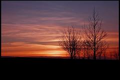 (Rn) Tags: trees sunset iceland 2007 kpavogur rn supershot magnsdttir mywinner rnmagnsdttir ranmagnusdottir
