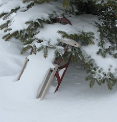 Sledding Day (sudergal) Tags: winter snow tree pine sledding sled find