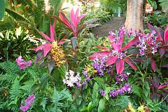 IMG_5828 (seanandkeely) Tags: sunset hawaii kauai grandhyatt walsh poipubeach monkseal hintz koloatown seaviewterrace