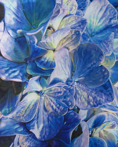 This is a colored pencil drawing of Hydrangeas that I did for my mom,