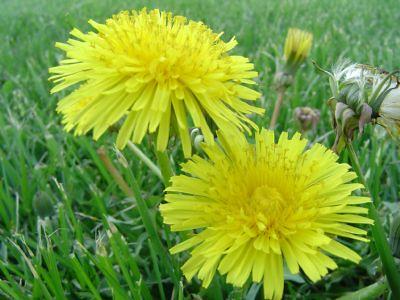 Thêm một chút cho hoa Bồ Công Anh - By Boong Boong - Yahoo 360! 430193046_b2073e8b66