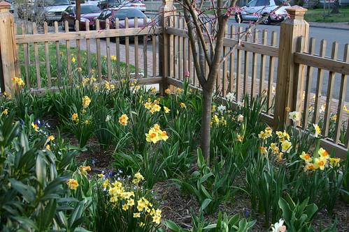 Front yard flowerpalooza