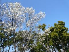 http://www.flickr.com/photos/laclef_yoshiyasu/433475557/