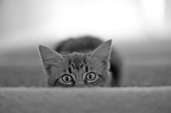 Eyes - by aftab.