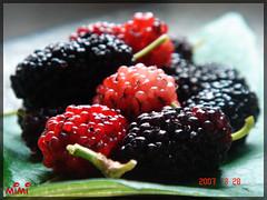 .`. (aSpEBeY) .`. (M  M ) Tags: red black green raspeberry