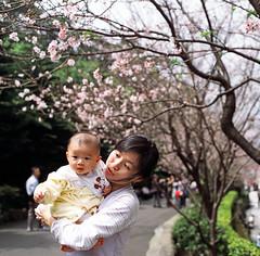 beneath the sakura trees