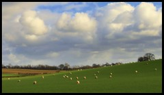 Fields, sheep and clouds (andrewlee1967) Tags: fields sheep clouds cheshire andrewlee1967 uk bravo abigfave superbmasterpiece ultimateshot andylee1967 canon400d landscape focusman5 andrewlee england