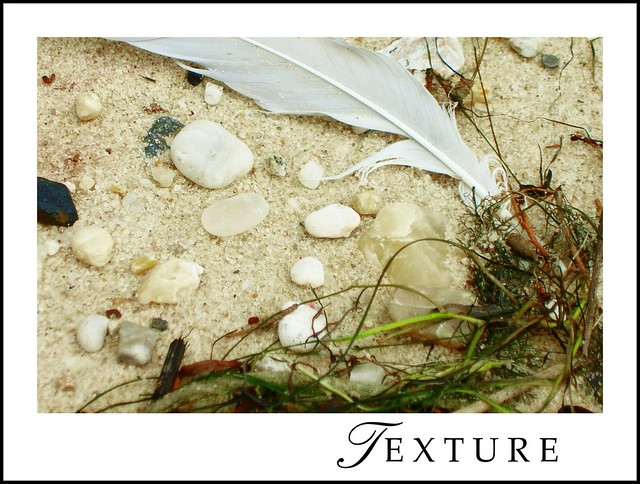 The Archives: Nature's Textures