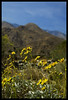 Desert flower (Ledio (mostly away)) Tags: california d50 landscape nikon desert palmsprings socal southerncalifornia peisazh nikonstunninggallery piesazh
