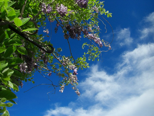 flowers, blue, clouds