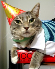 This Year Birthday (bumbe) Tags: birthday cat clothes hip 2yearsold