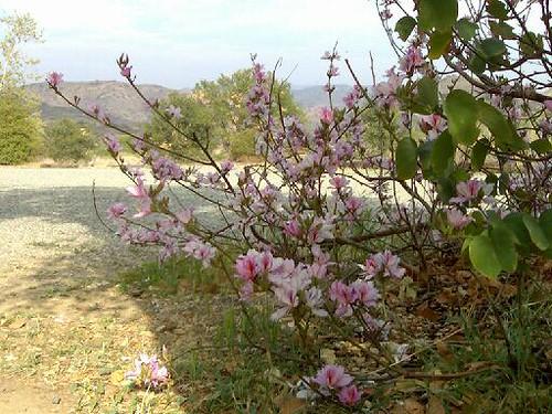 The Hummingbird Tree