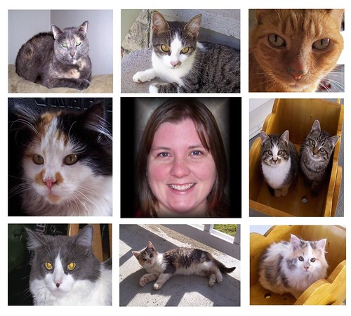 Cat Lady Collage