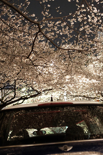 mini & cherry tree