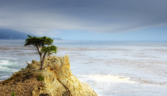 Alone (Wolfgang Staudt) Tags: california travel tree beach phoenix birds rock coast monterey spring nikon holidays sigma pebblebeach lonecypress 17miledrive cypress pacificbeach sealion pacificgrove oceanview vacancy pacificcoast sealrock scenicview scenicroad naturesfinest sunsetdrive kodakv570 specland wolfgangstaudt sigmaaf356328300dgmacro superbmasterpiece beyondexcellence favemegroup5 wowiekazowie superhearts