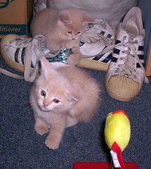 Cats and Shoes