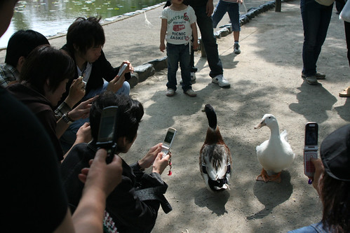ducks & paparazzis