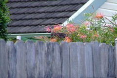 bird zoom australia feeder telephoto nectar fujifinepix 10x s5600