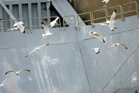 Gulls at the Reservoir,Alton