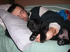 nanne tra le coccole (Iaia's) Tags: dog puppy labrador brando cucciolo