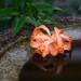 花弁の雨粒