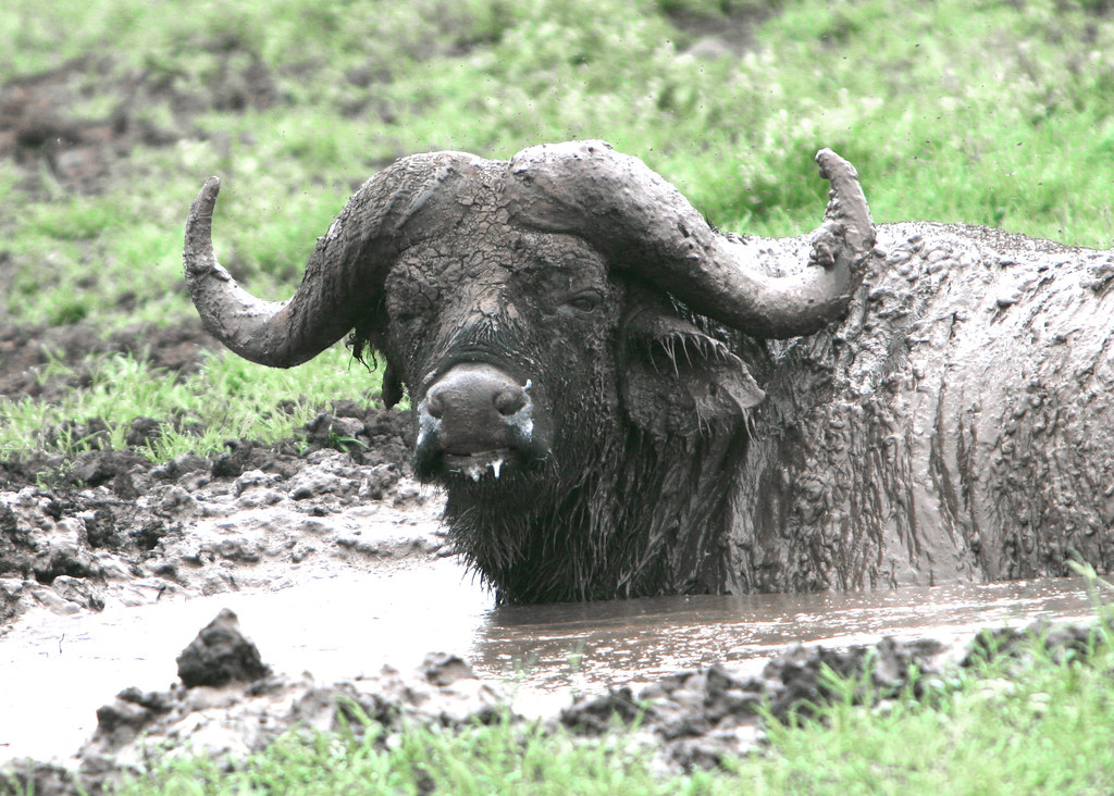 Pictures of Buffalo --...